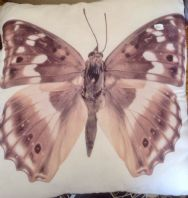 Beautiful Butterfly Cushion